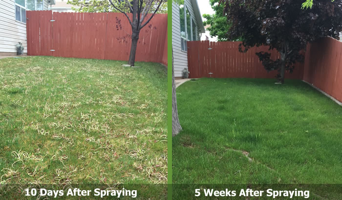 Weed Spraying and Weed Control in Cedar City and Enoch Utah.
