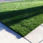 Cedar Lawn Care Client Lawn