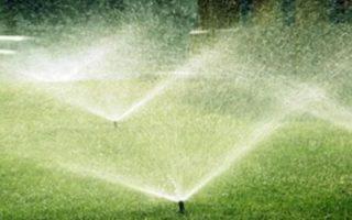 Proper Watering Practices