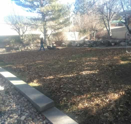 Before Yard Cleanup